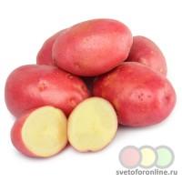 Картофель красный 1 кг вес фас Россия